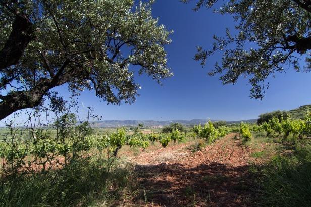 Soil-Types-Clay-Soils-Rioja-Alta